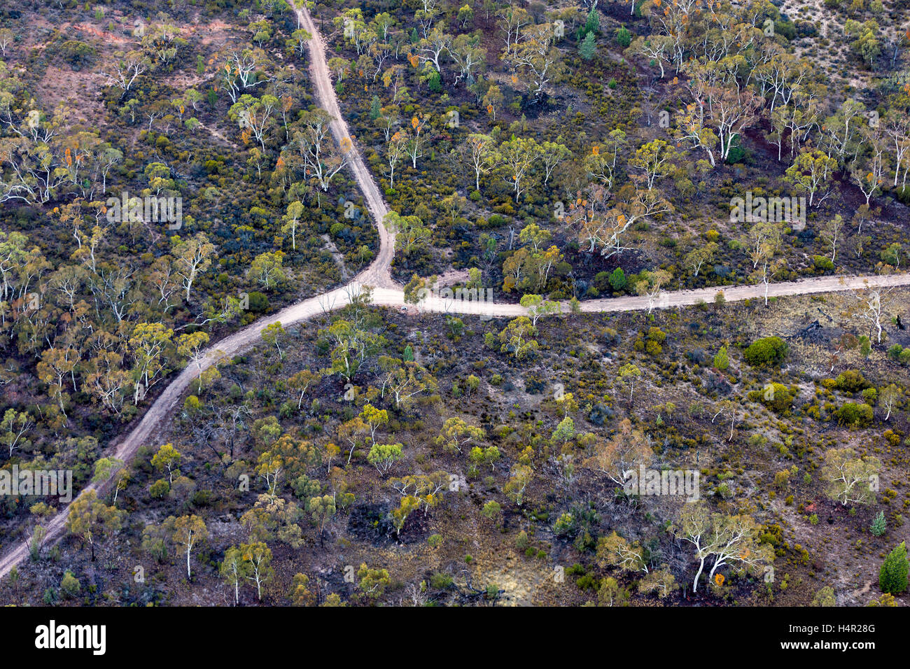Low level aerial  of typical bushland in Western Victoria near Horsham. - Stock Image