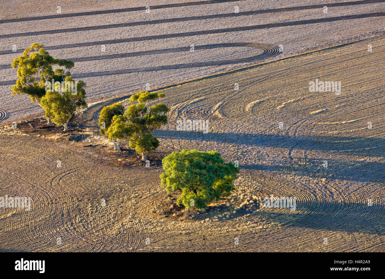 Low altitude aerial photo of trees growing in dryland farming area. - Stock Image