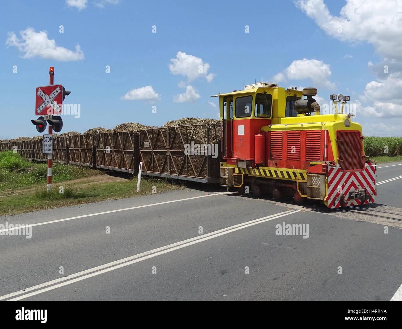 Engine hauling sugar cane - Stock Image