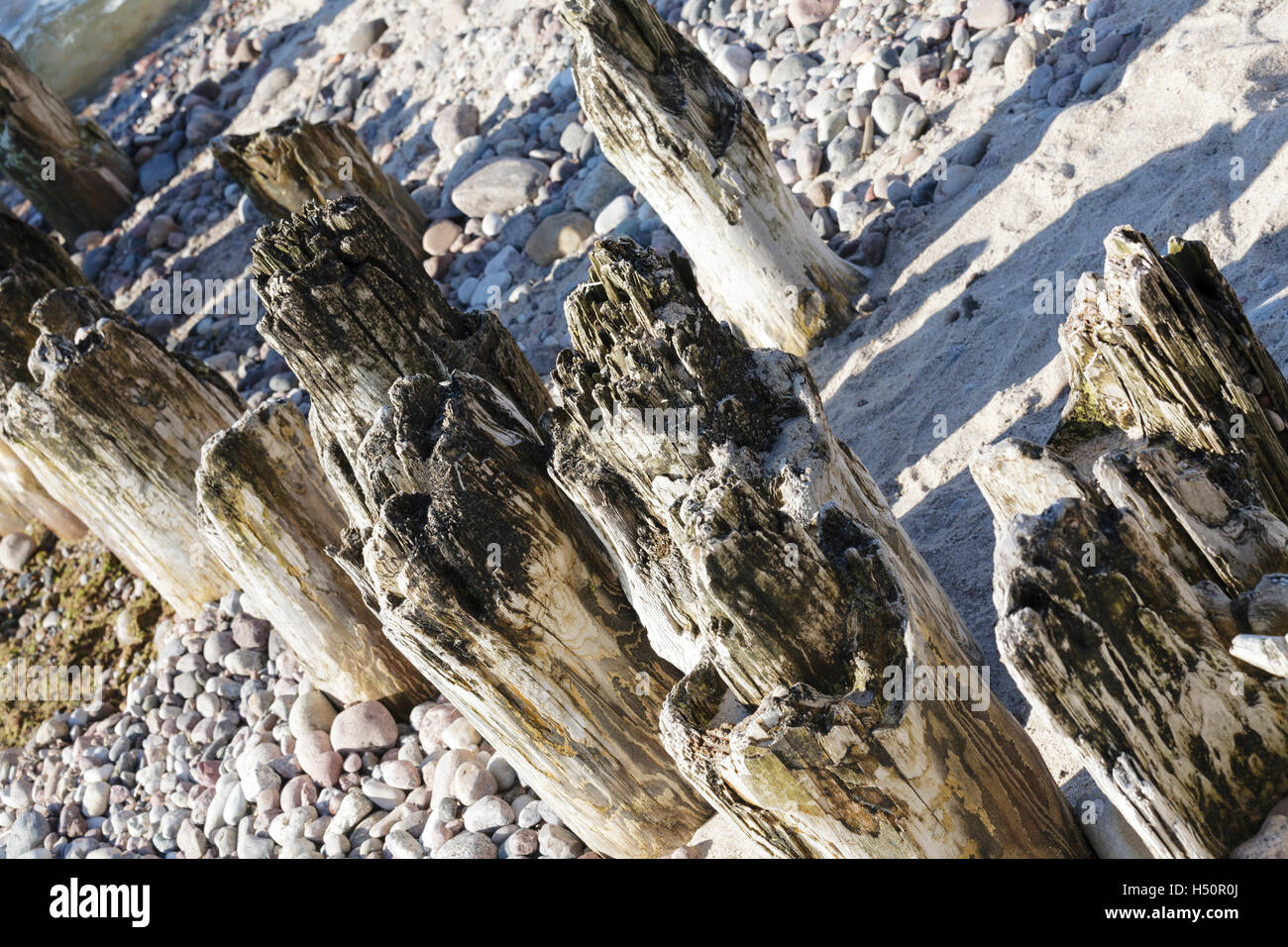 Partially rotted wooden breakwaters - Stock Image