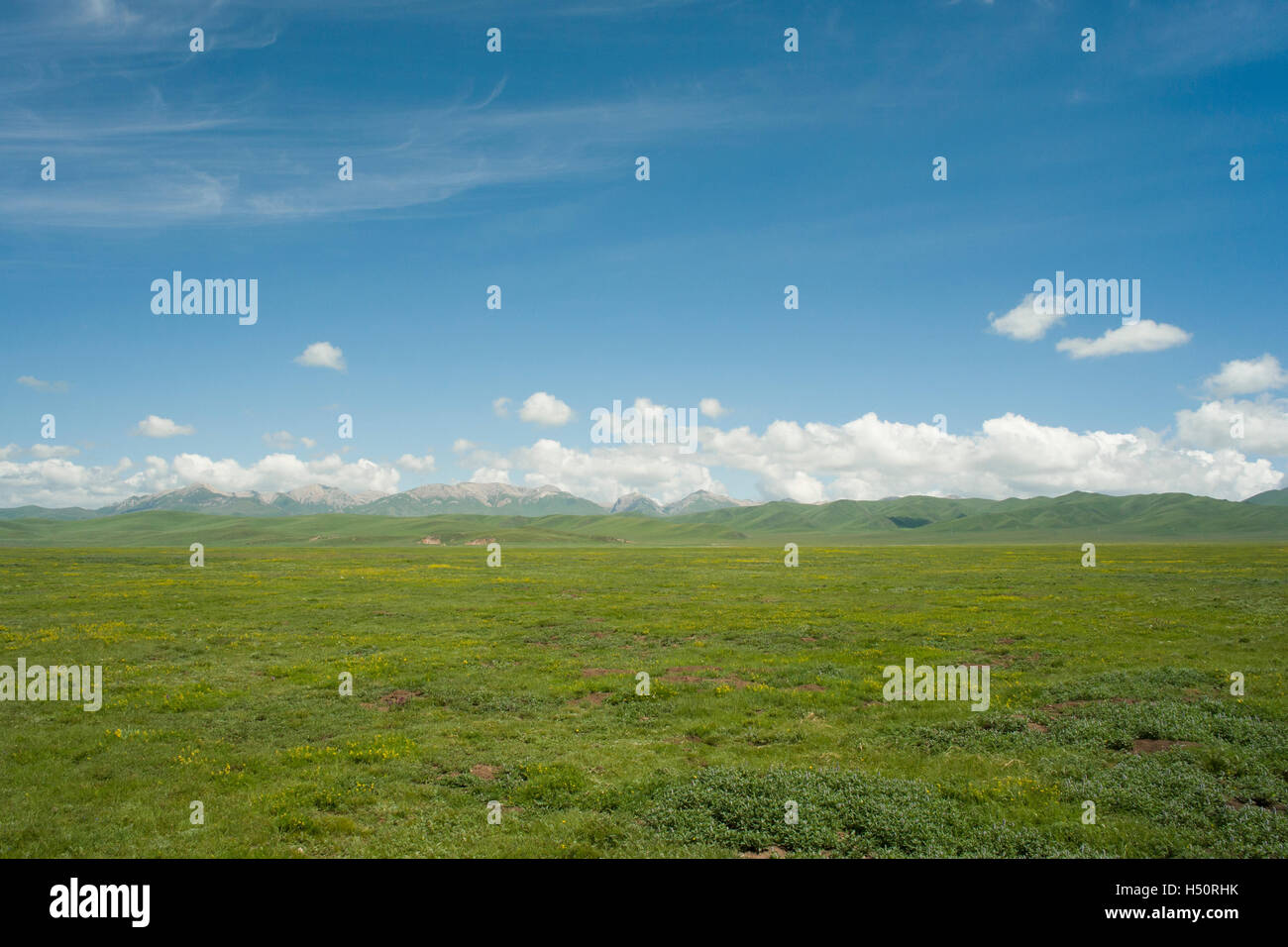 Zoige grassland in Sichuan, China - Stock Image