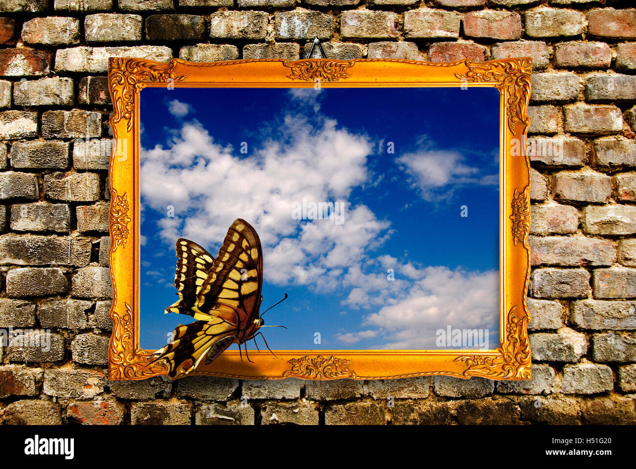 butterfly standing on a picture frame, imagination and creativity concept - Stock Image