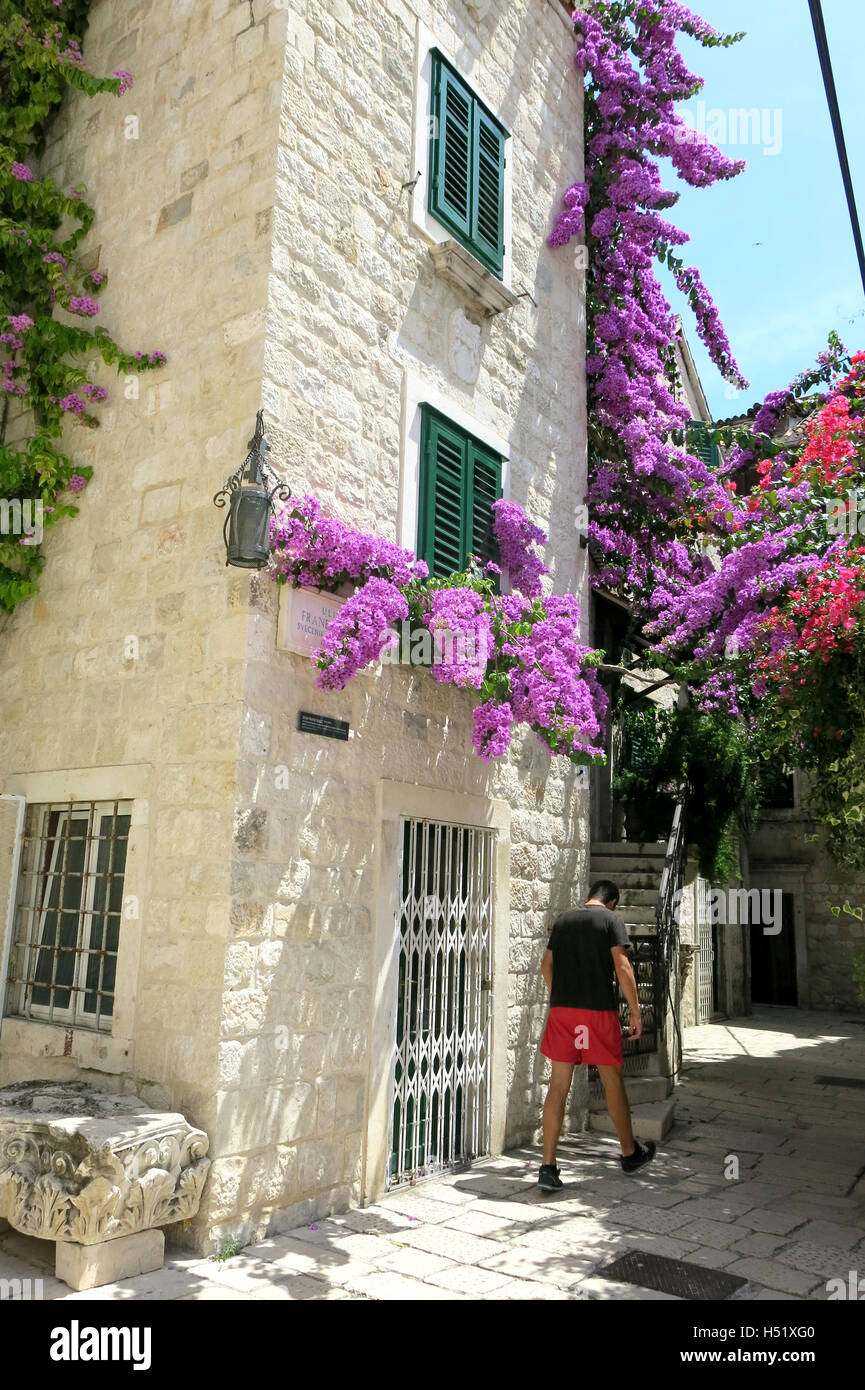 SPLIT Croatia Old town Bougainville clutching at the facade - Stock Image