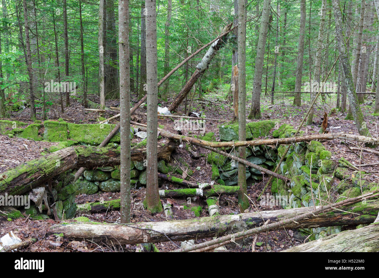 Abandoned cellar hole at the site of Merrill's Mountain House in Warren, New Hampshire during the summer months. - Stock Image
