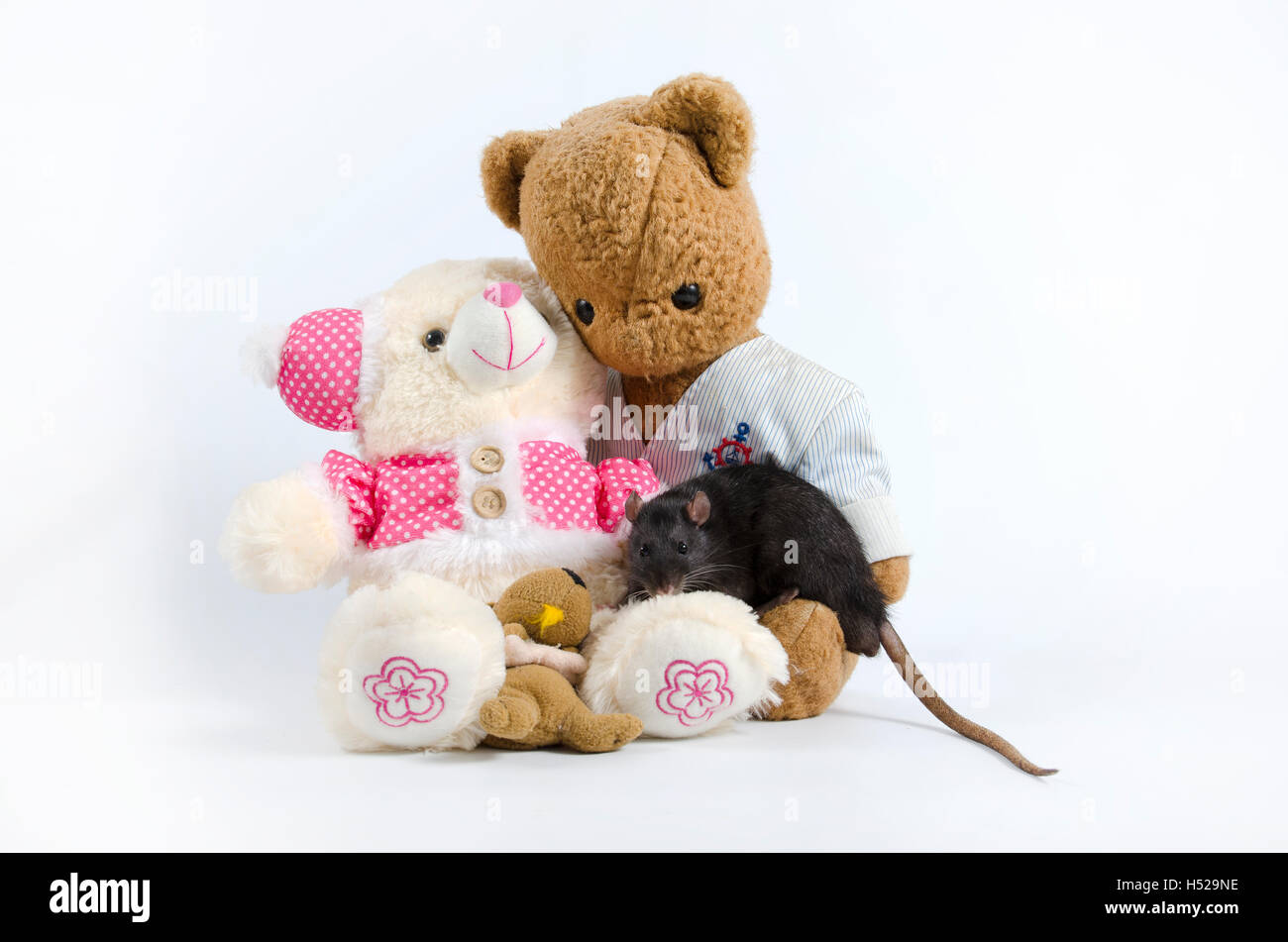 Intelligent and funny pets decorative rat and old soft toys. - Stock Image