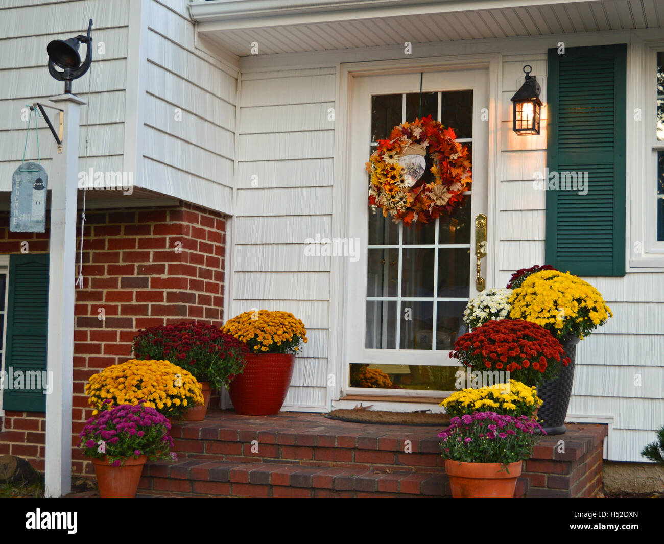 Colorful fall mums bloom on a front stoop in Pasadena, Anne Arundel County, Maryland, USA. - Stock Image