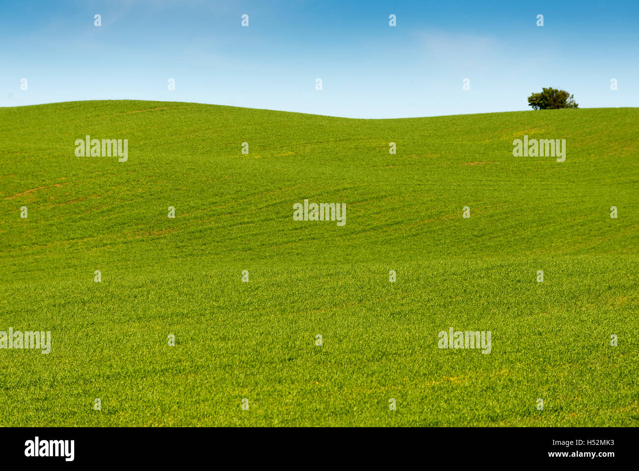 green fields of the city of Frutillar - Stock Image