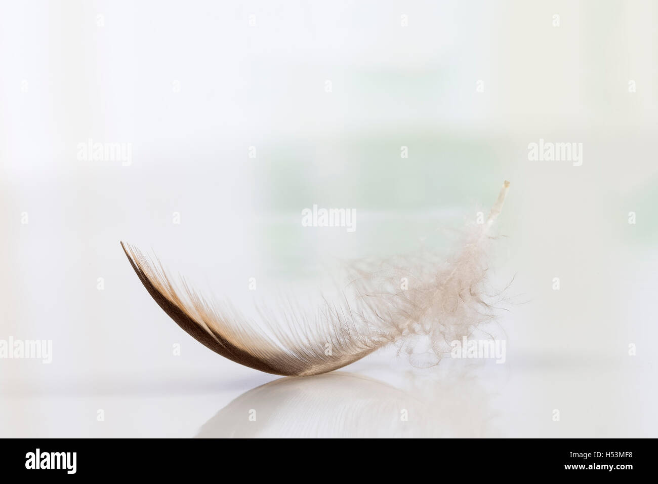 Lone feather in the sky, Symbol of softness - Stock Image
