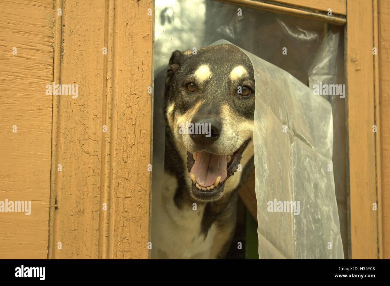 Peeking Out Of Door Stock Photos Peeking Out Of Door Stock Images