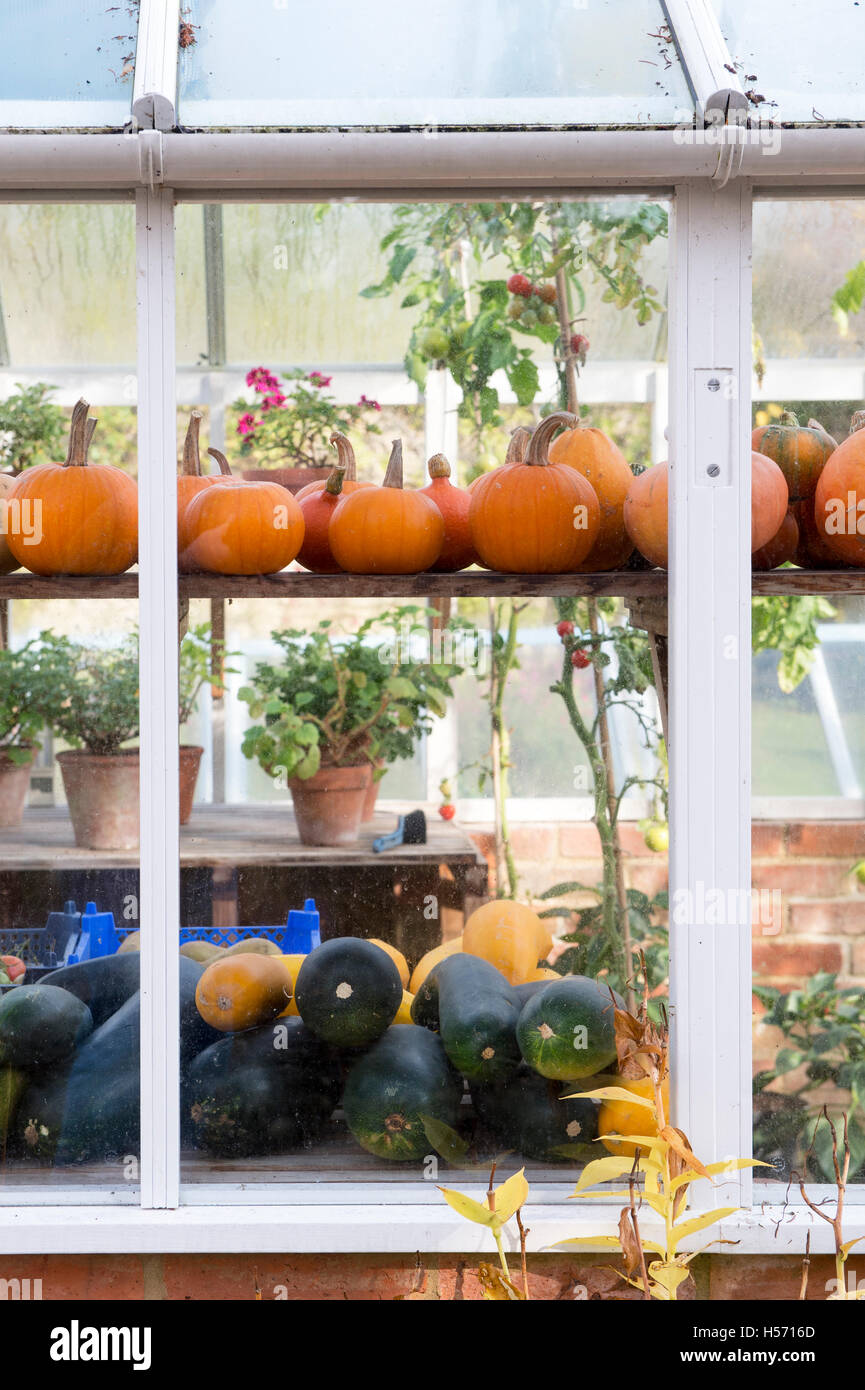 Pumpkins in the greenhouse in autumn at Rousham House and Garden. Oxfordshire, England - Stock Image