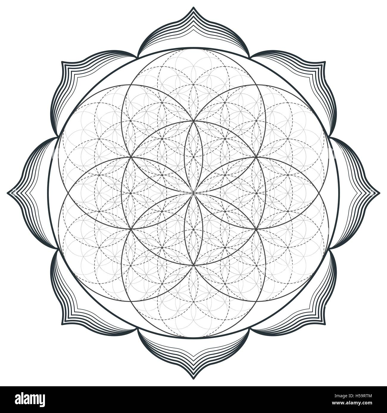 Lotus Flower Seed Stock Vector Images Alamy