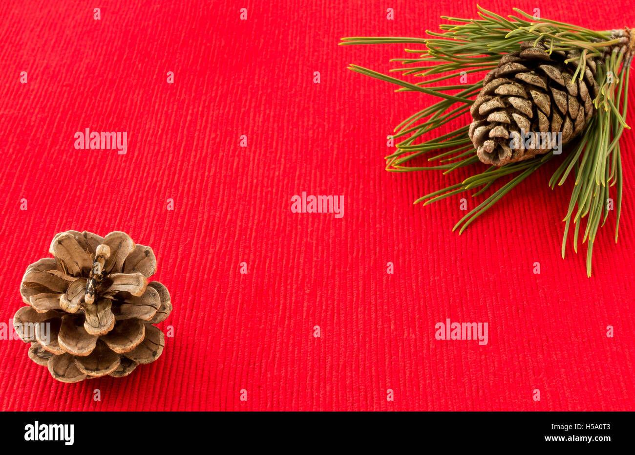 Winter Background with Pine Cones and Pine Tree Twig - Stock Image