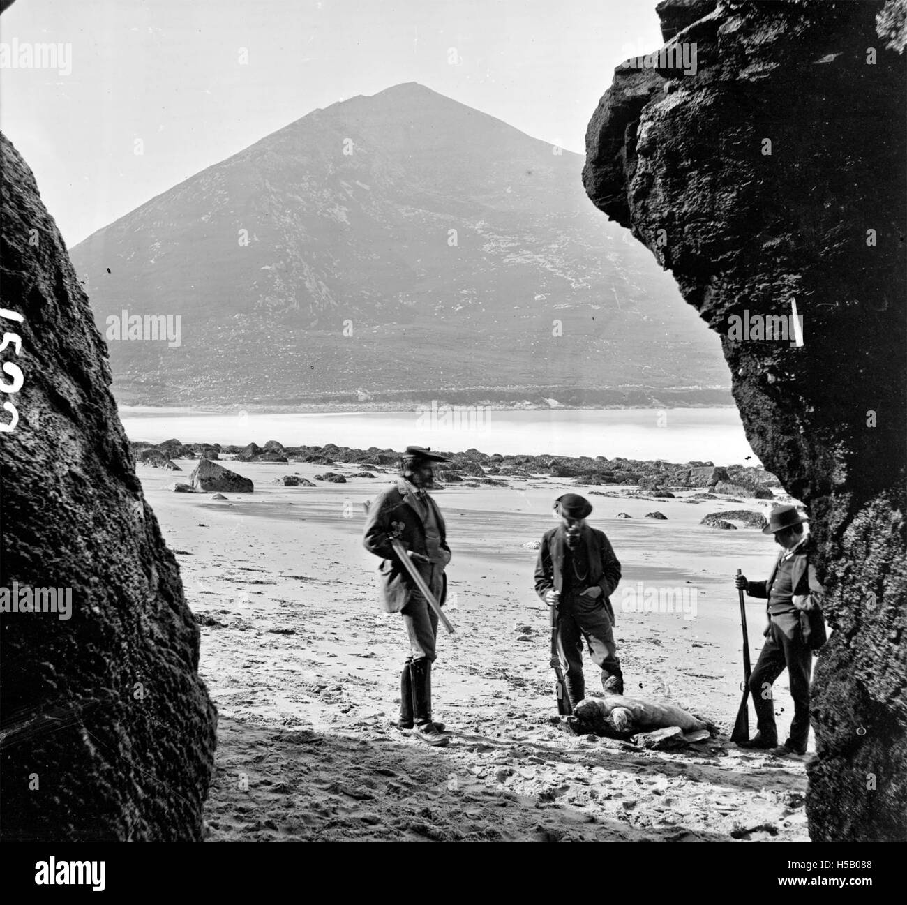 Shooting Seals on Achill Island - Stock Image