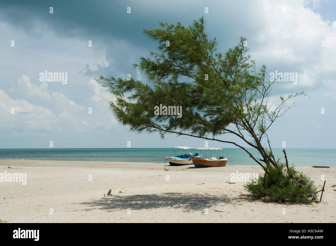 Casuarina beach, Karainagar, Jaffna Peninsula, Sri Lanka - Stock Image