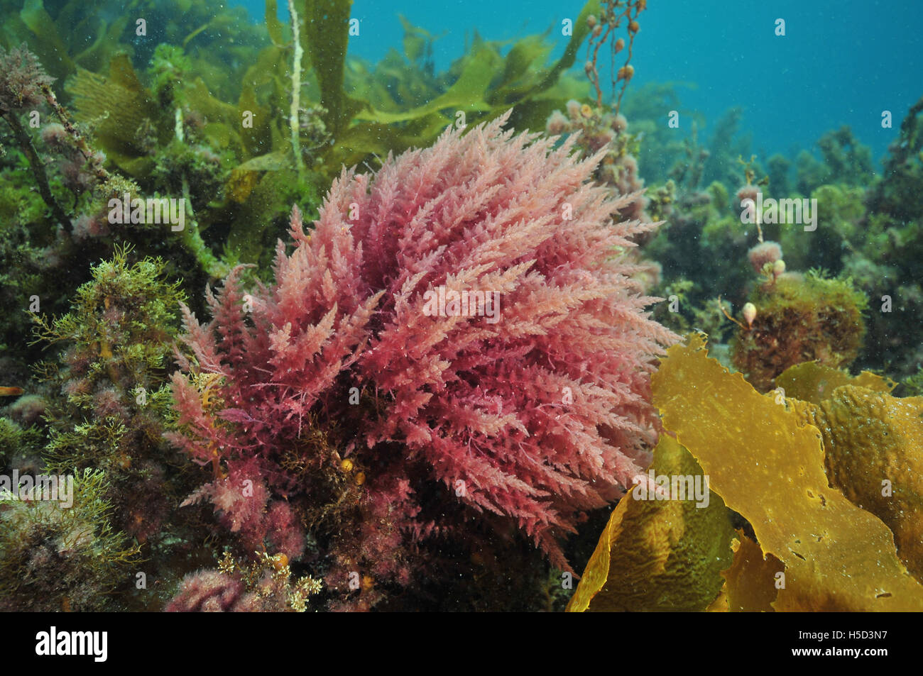 Bright colours of various sea weeds Stock Photo