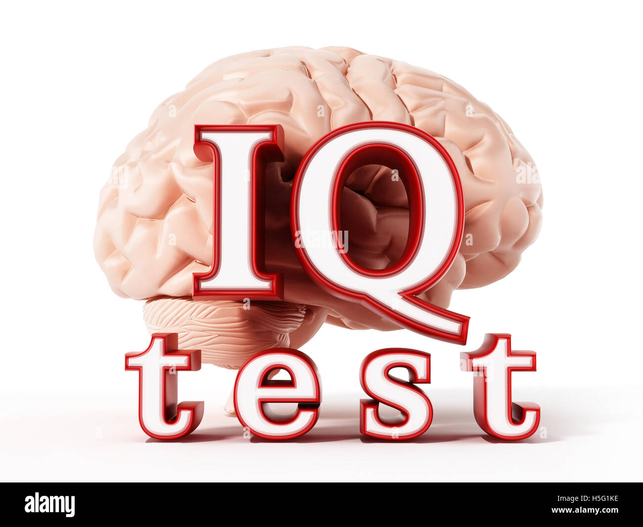 Human brain and IQ test text isolated on white background. 3D illustration. - Stock Image