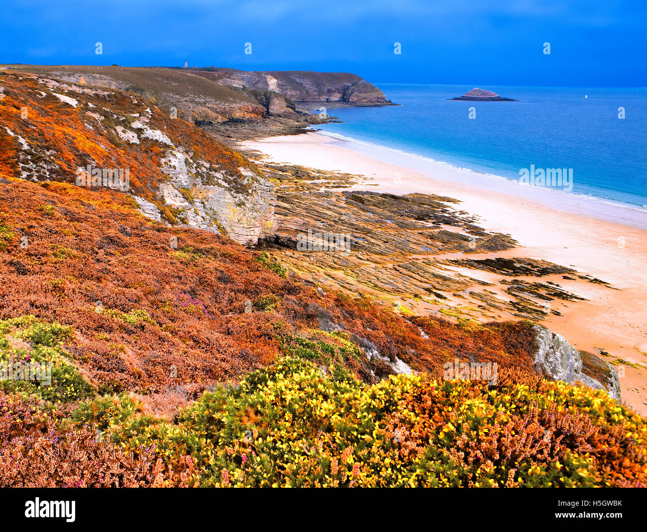 Flowering heather and gorse at cape Frehel in Brittany, France - Stock Image