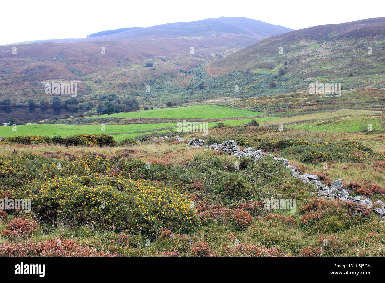 Moorland Scenery Above The Village of Cilcain, The Clwydian Hills With Moel Famau In Distance - Stock Image