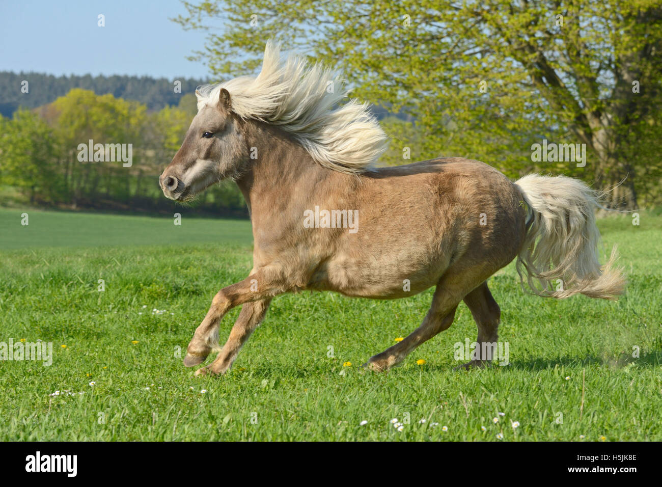 Classic Pony in the field - Stock Image