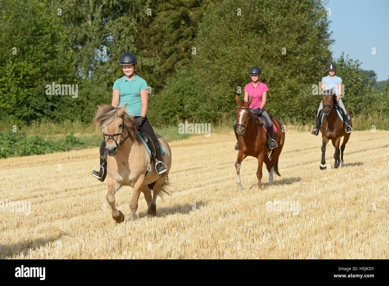 Three young riders on horseback riding in a stubble field - Stock Image