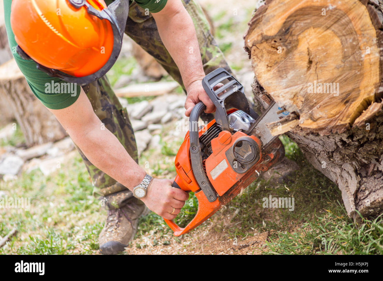 Worked cutting a tree with a chainsaw Stock Photo