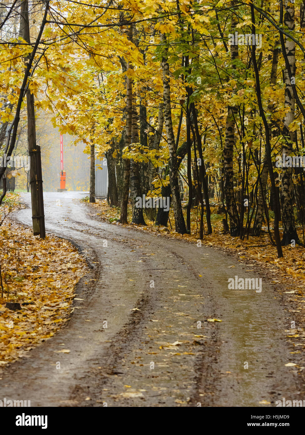 Twisting road in an autumn forest park - Stock Image