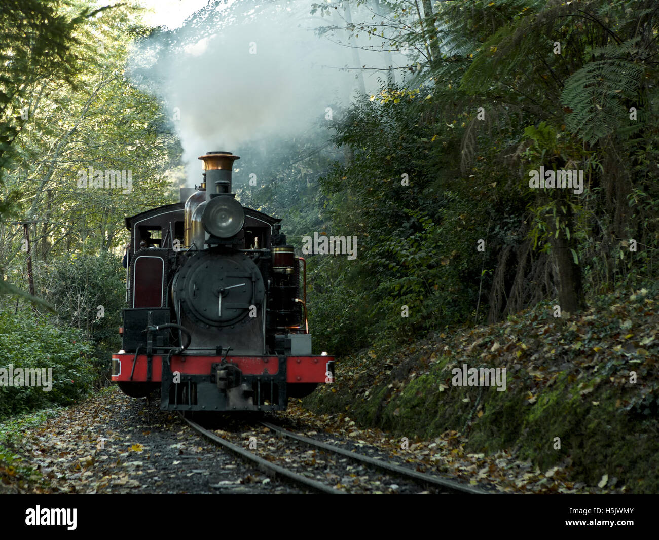 Puffing Billy train ride through the Dandenong Ranges near Melbourne, Australia - historic train trip - Stock Image