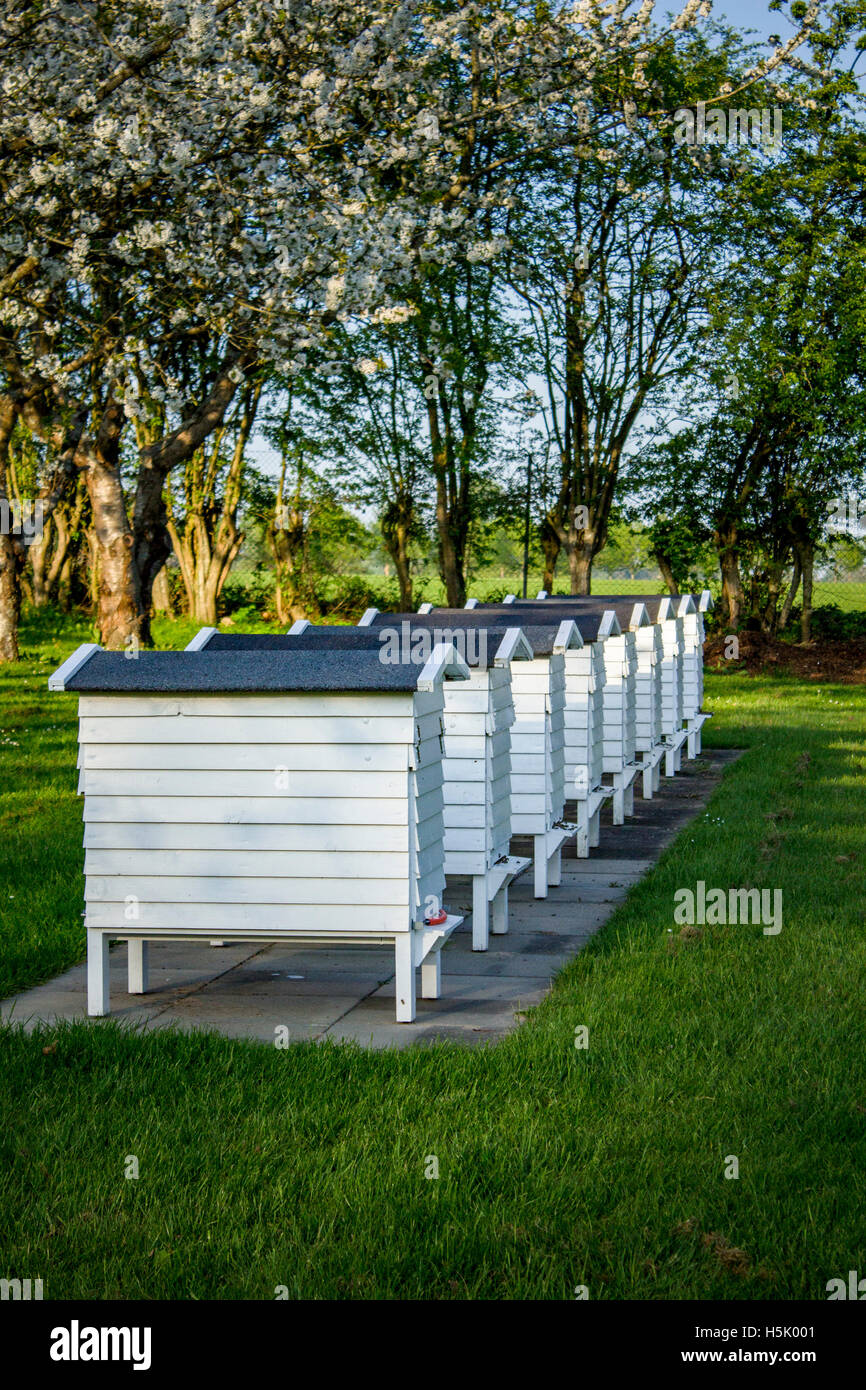 The old beehives - Stock Image