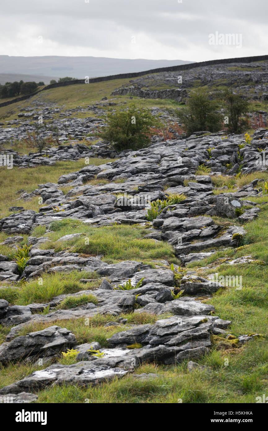 Limestone pavement, Sulber, Ingleborough Nature Reserve, near Horton in Ribblesdale, Yorkshire. - Stock Image