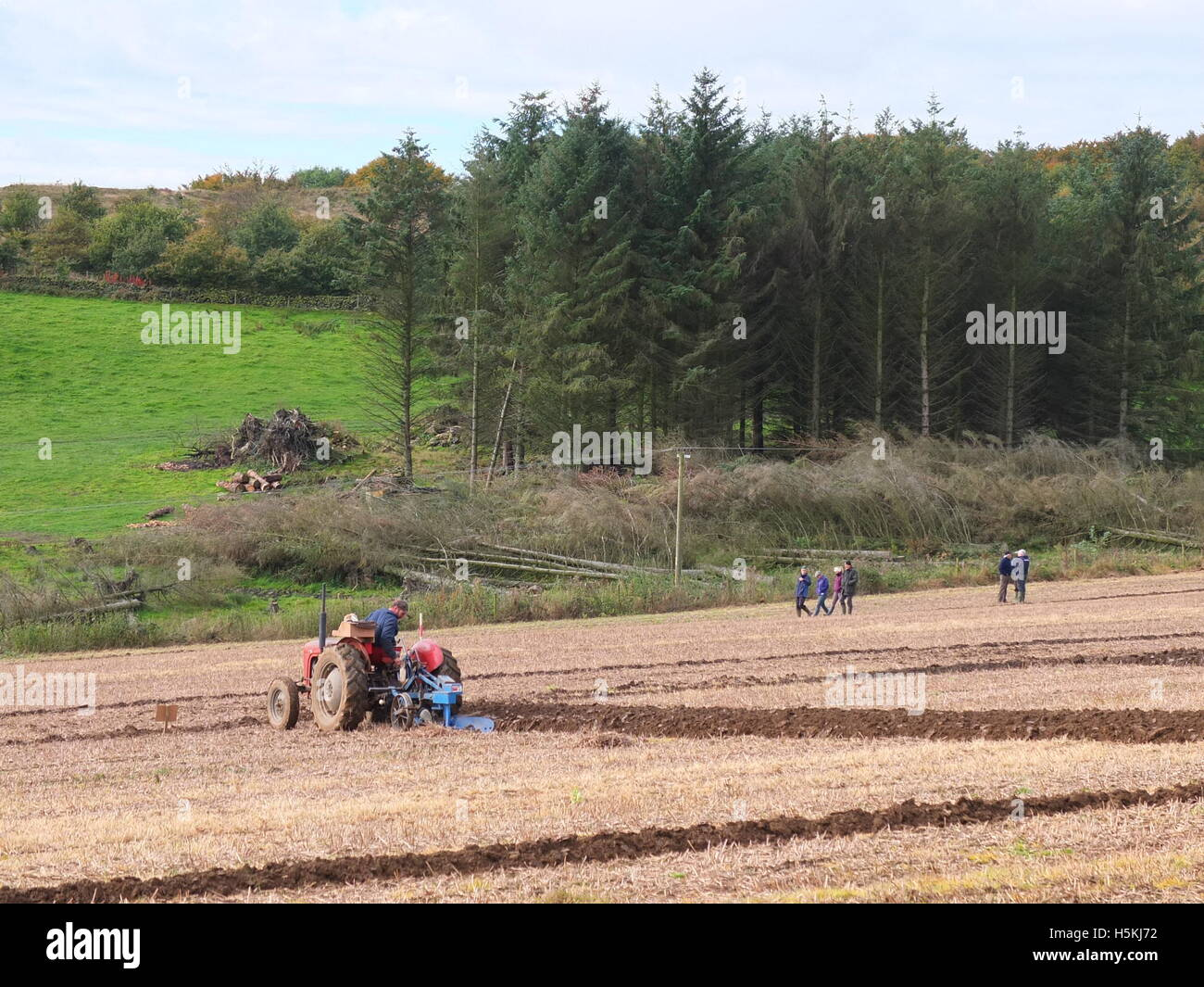 Farmer ploughing at Ashover Ploughing match, felled trees and spectators in b/g. Highoredish Farm, Derbyshire Stock Photo
