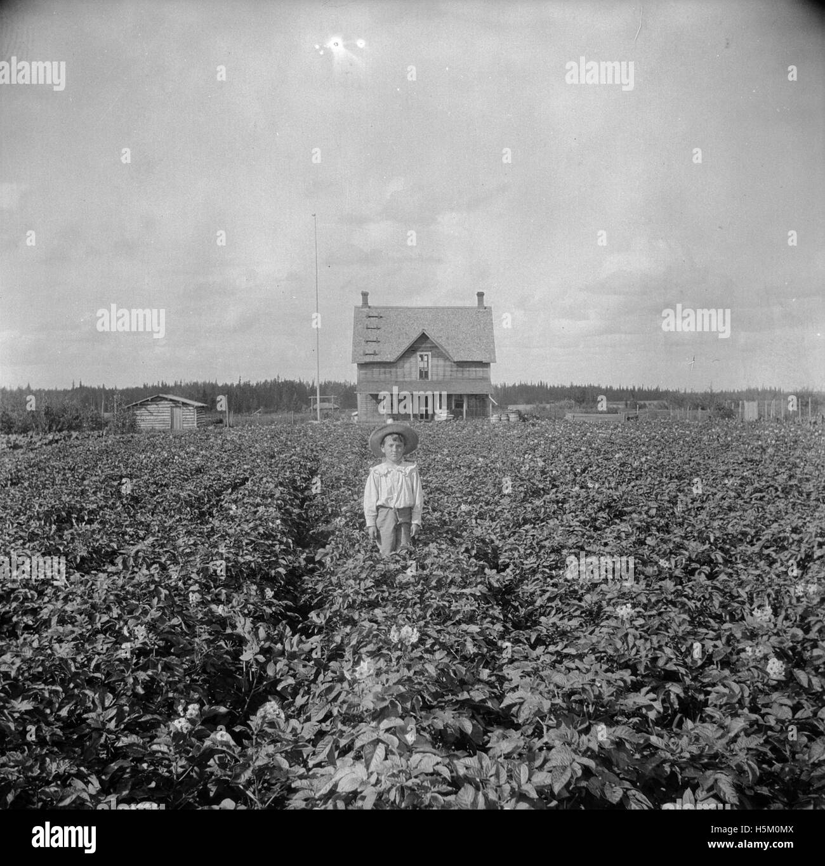 Brebner boy on the homestead 292 - Stock Image