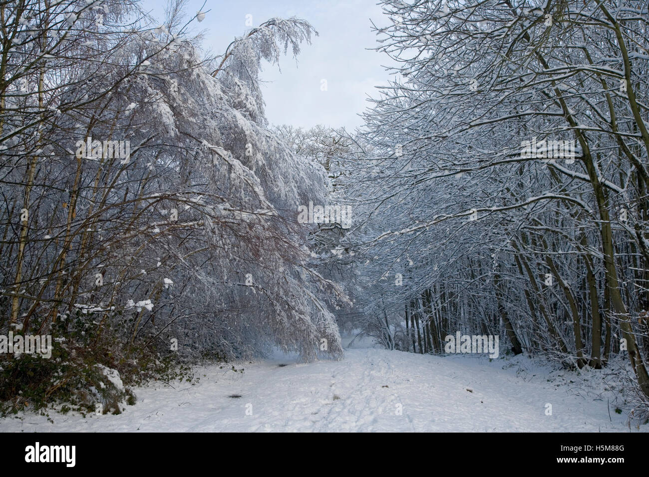 Snow covered bridleway - Stock Image