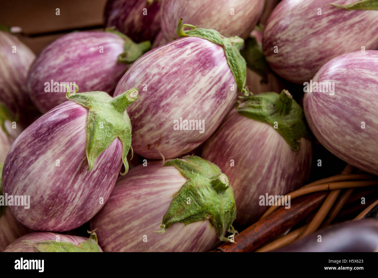 A type of eggplant commonly called zebra or graffiti eggplant. - Stock Image