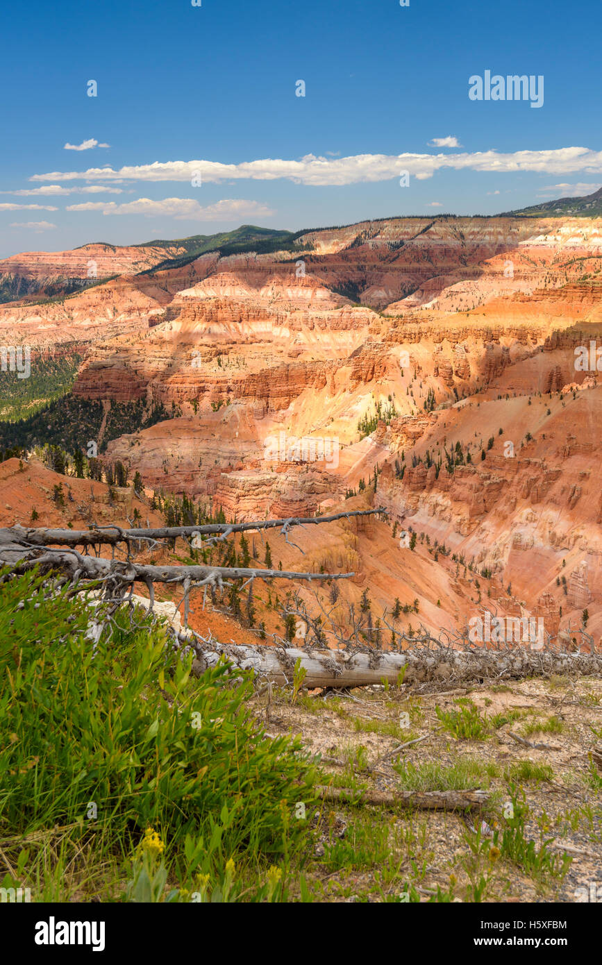 Cedar Breaks National Monument, Utah, sits at over 10,000 feet and looks down into a half-mile deep geologic amphitheater. - Stock Image