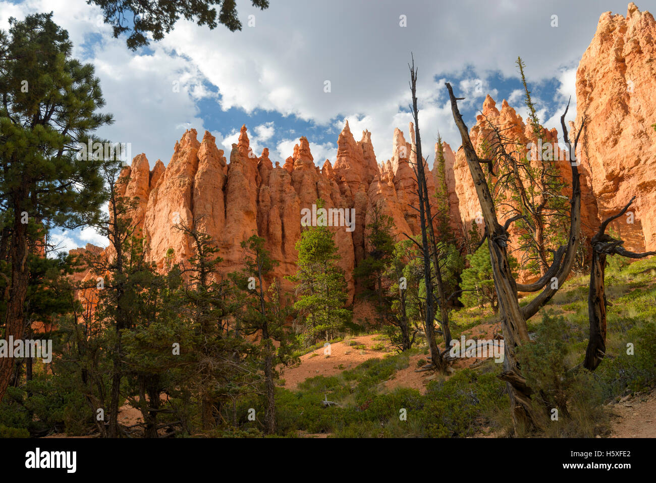 Scenic Views, Bryce Canyon National Park, located Utah, in the Southwestern United States. - Stock Image