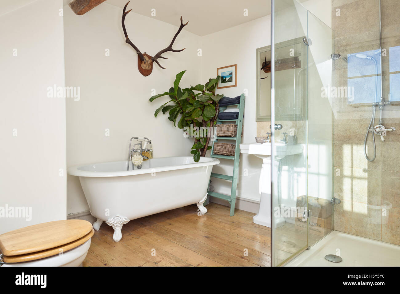 A modernised bathroom in a Victorian home, showing wood flooring, a freestanding bath & walk in shower - Stock Image