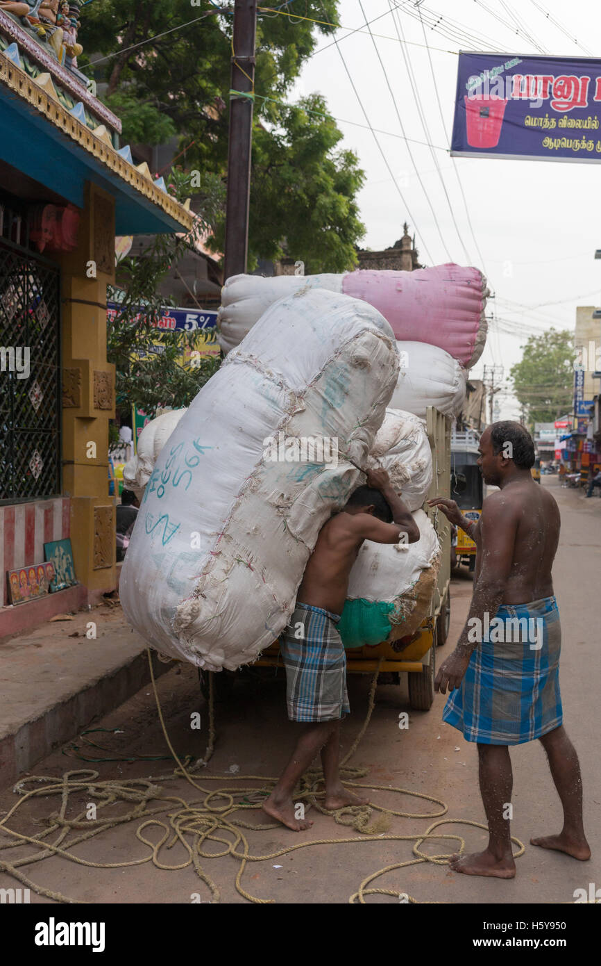 Carrying a huge cotton bale. - Stock Image