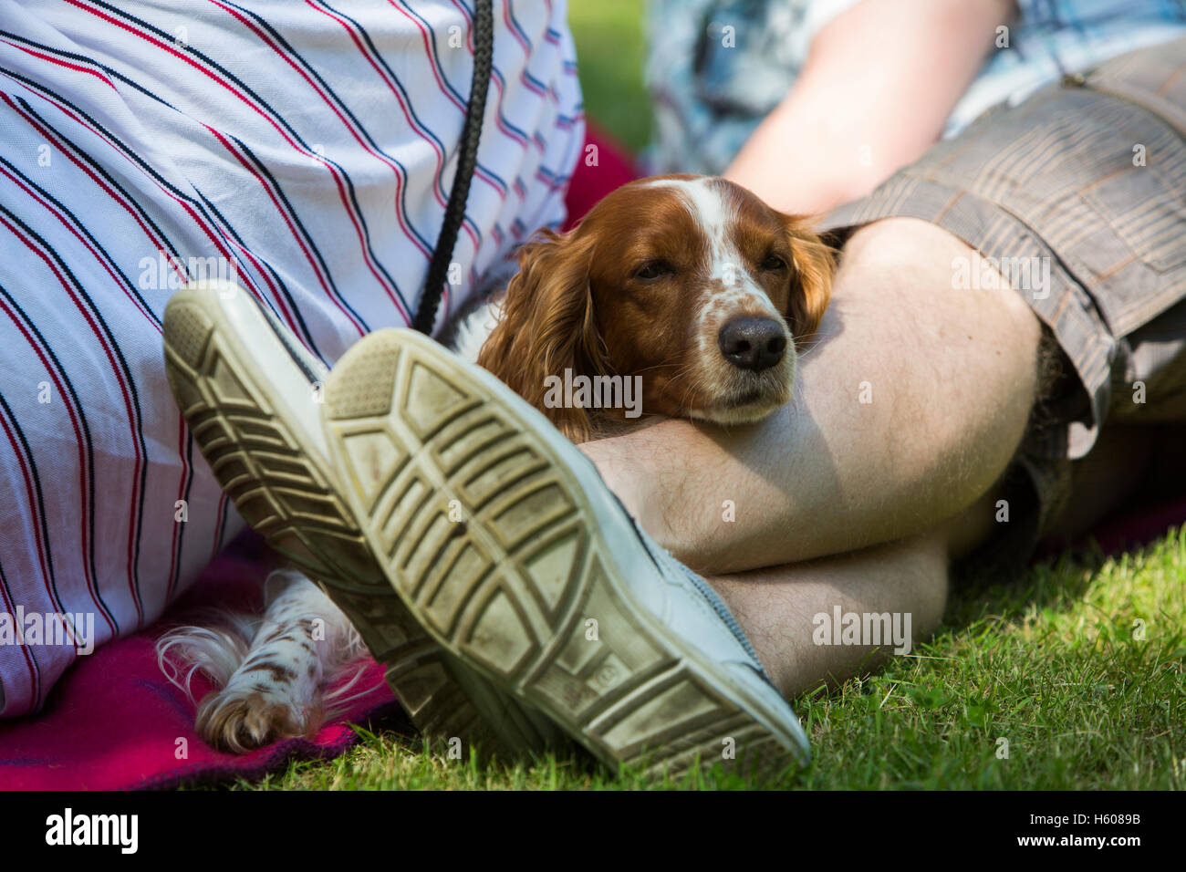 A dog is sleeping against his masters feet. - Stock Image