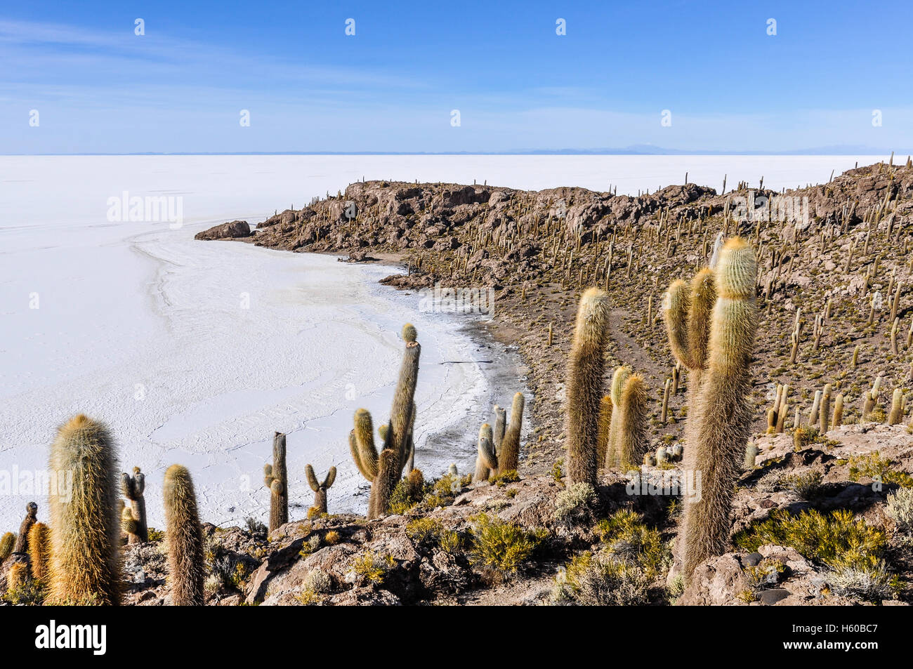 Cactus group in Isla de Pescado in Salar de Uyuni, the biggest salt flat in the world, Bolivia - Stock Image