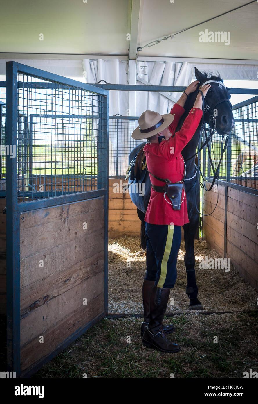 RCMP Mountie preparing horse for ceremony - Stock Image