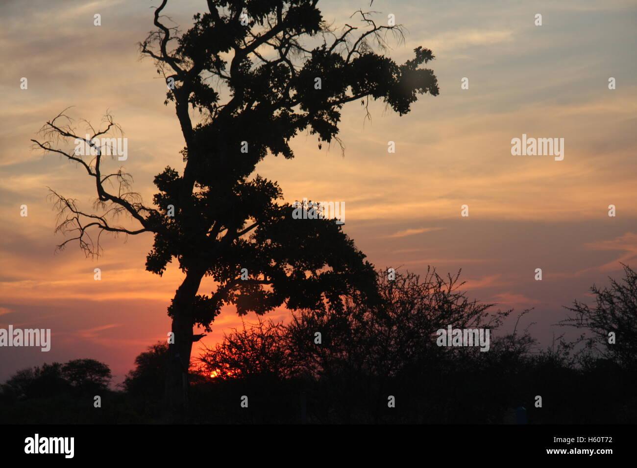 Bushveld sunset - Stock Image