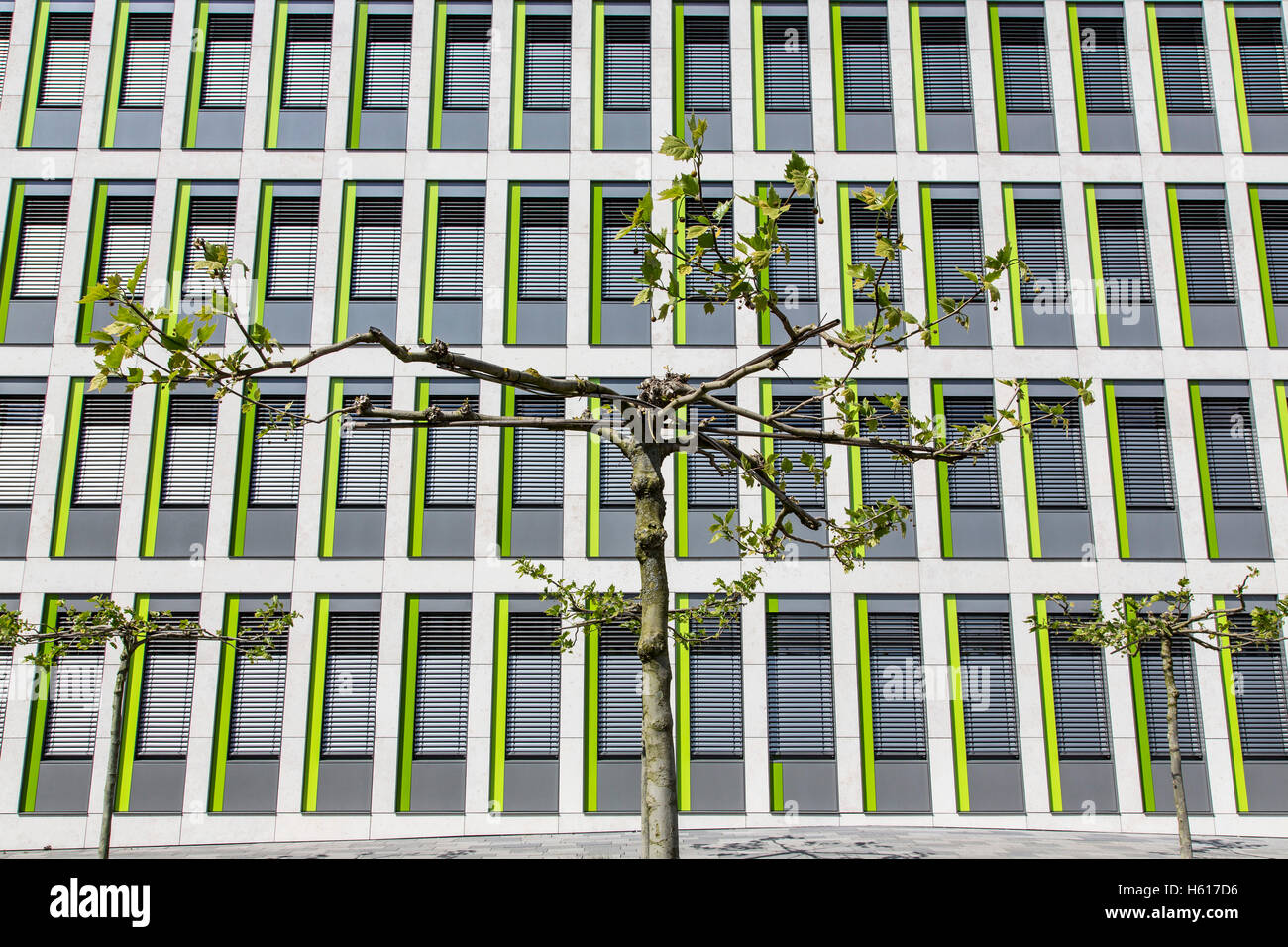facade of a modern office building, small windows, small tree in front, - Stock Image