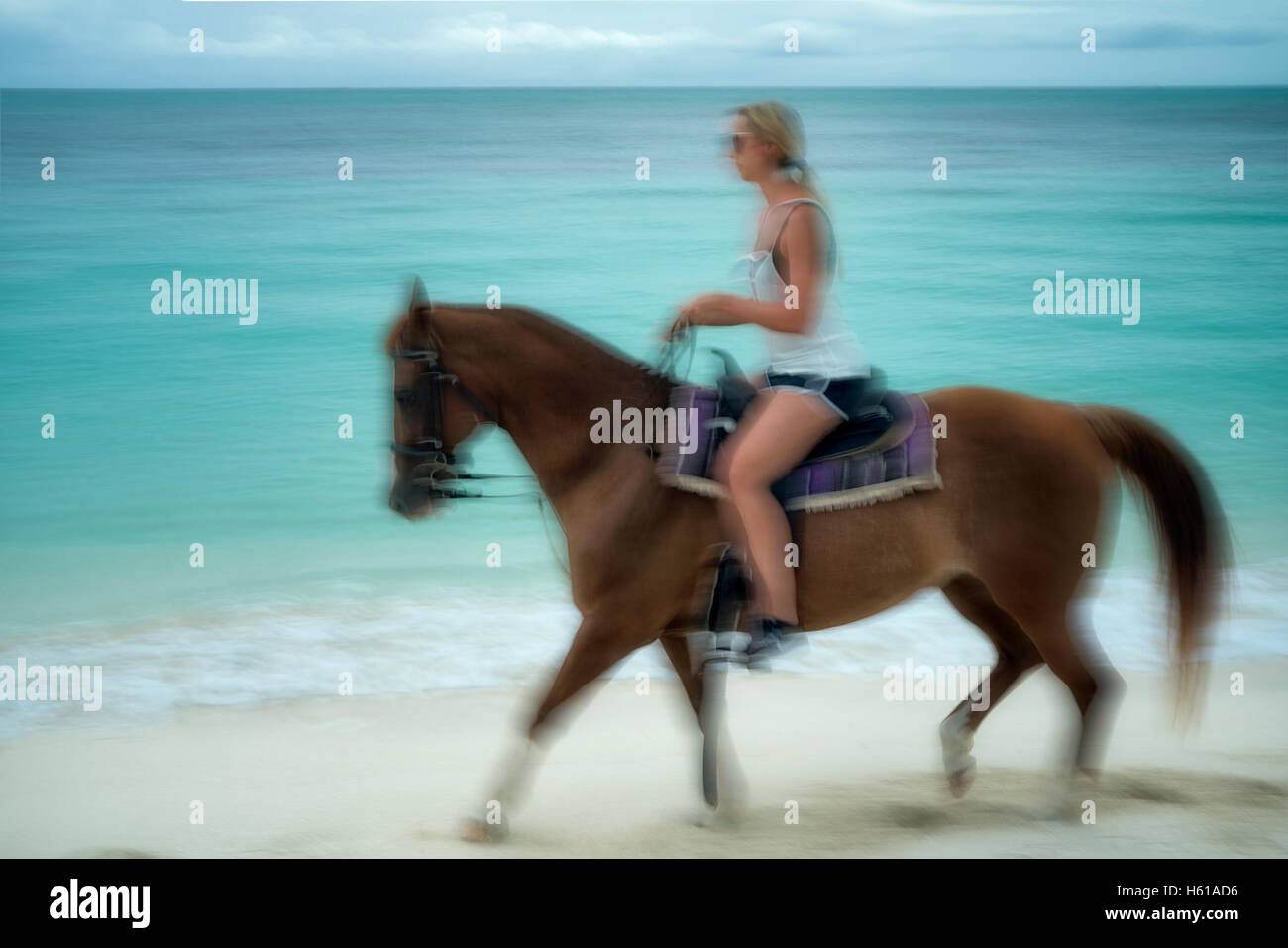 Woman galloping horse on shore. Turks and Caicos. Providenciales - Stock Image