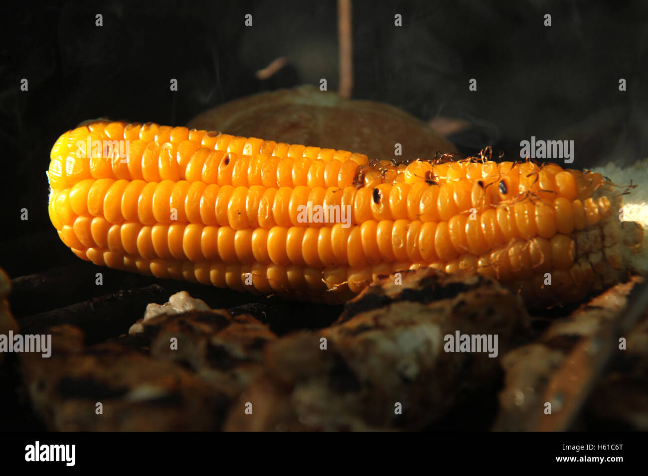 Close-up of corn grilled at outdoor camping - Stock Image