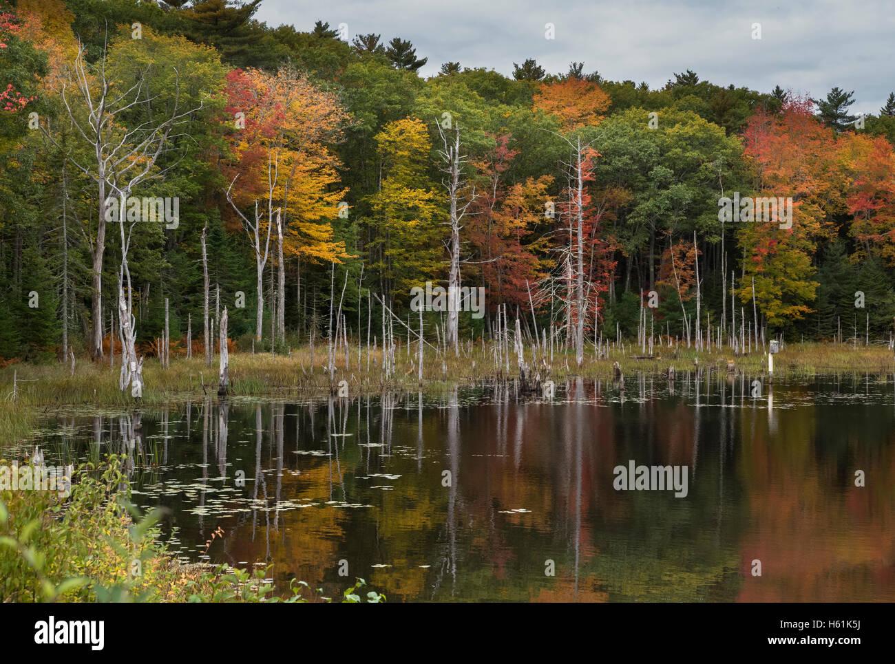 Water reflections Bristol Maine USA Stock Photo