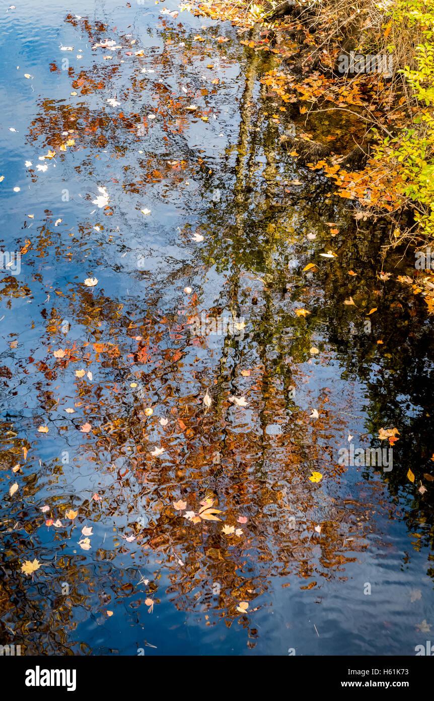 Water reflections Bristol Maine USA - Stock Image