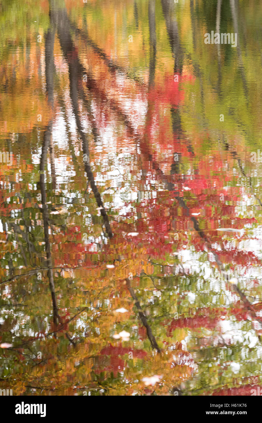 FALL FOLIAGE WATER REFLECTIONS FRIENDSHIP MAINE USA Stock Photo