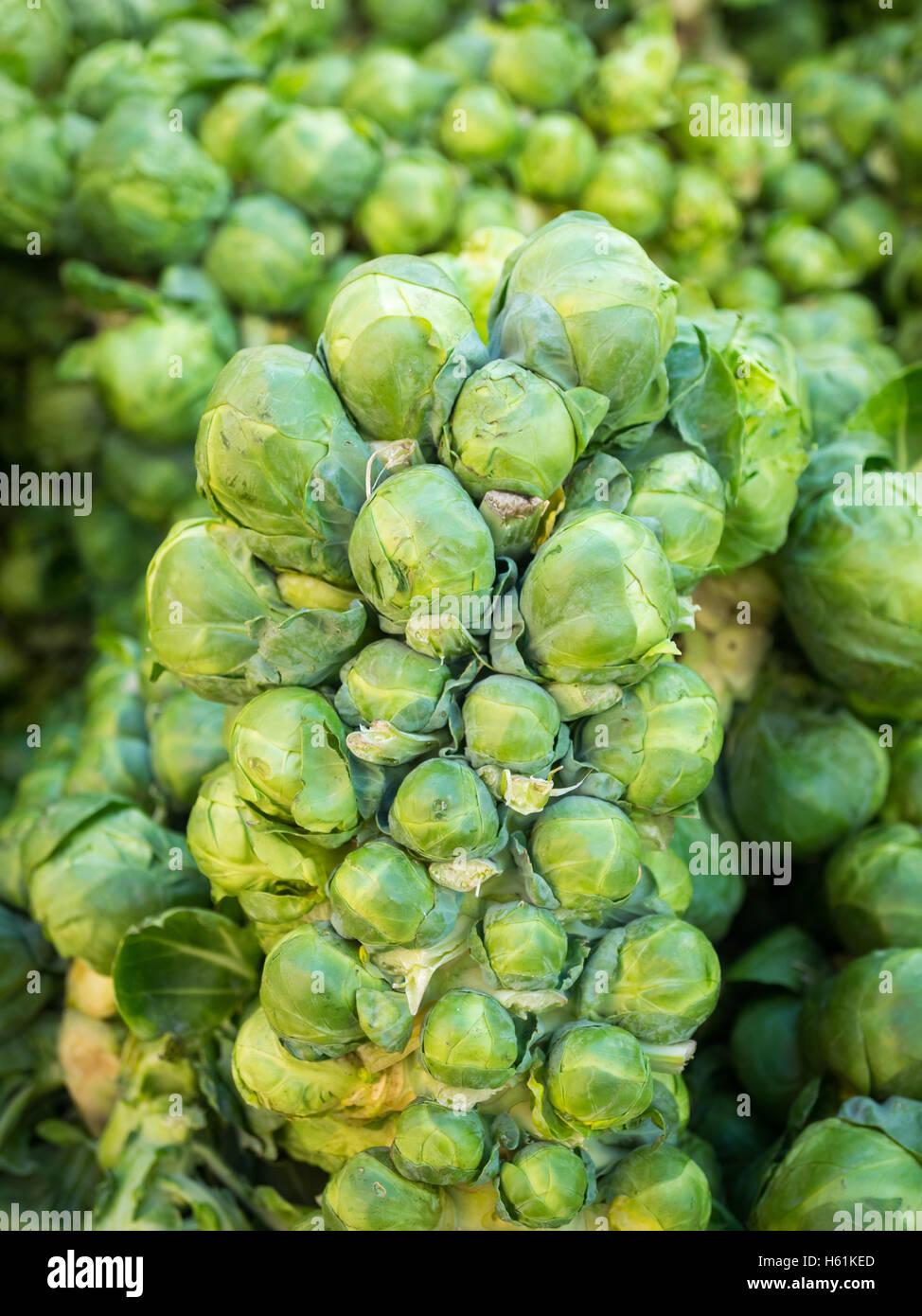 Brussel sprouts for sale at the City Market (104 Street Market) in Edmonton, Alberta, Canada. - Stock Image
