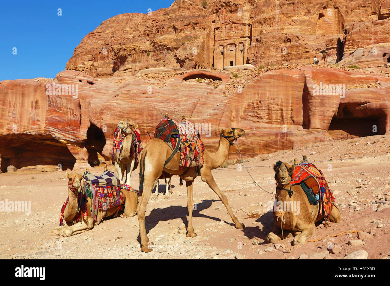Camels and the Royal Tombs in the rock city of Petra, Jordan Stock Photo