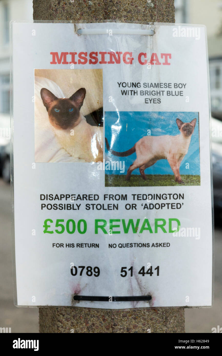 poster for a lost missing or possibly stolen pet which offers a